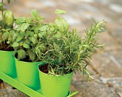 Plaisirs Verts - Sévrier - Jardinerie